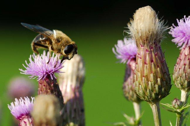 een wesp op het boerenland in angerlo