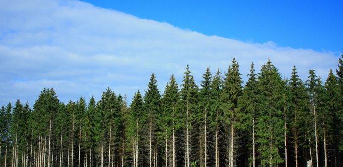 uitgestrekte naaldbossen Zweden