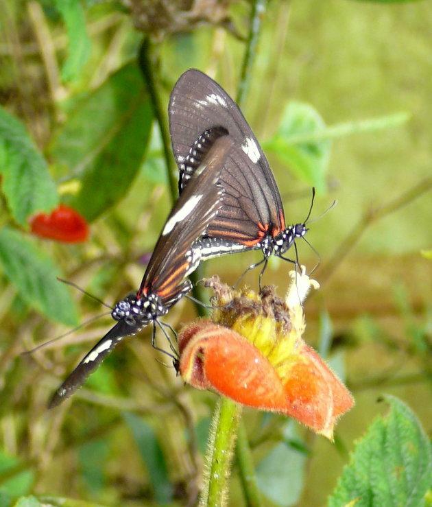 Prachtige vlinders.