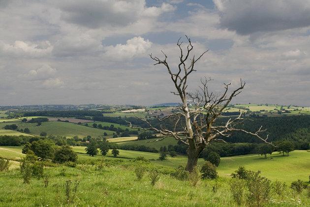 Dode boom in levendig landschap