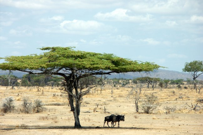 Savannah in de Serengeti