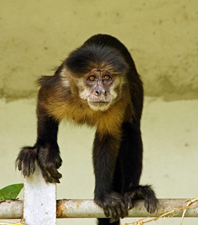 wild aapje in Palmentuin