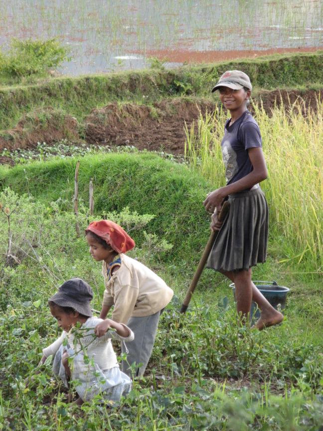 Hoedjes in Madagascar