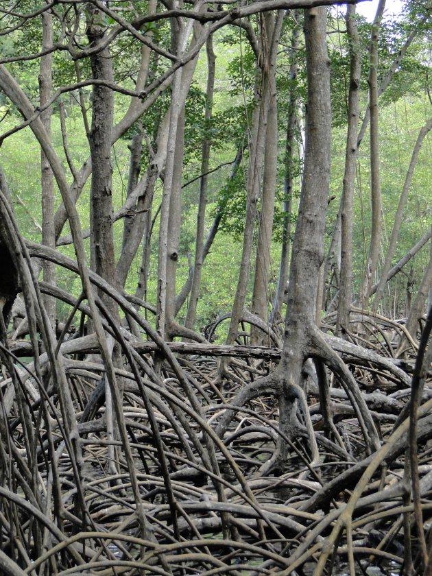 Meer mangrove