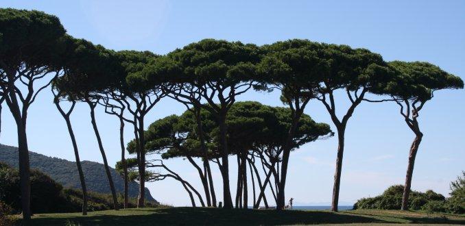 De pijnbomen van San Vincenzo