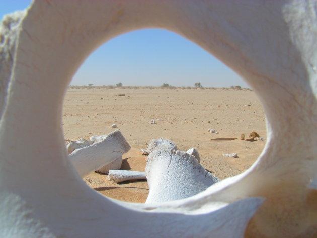De sahara, gezien door een kamelenskelet