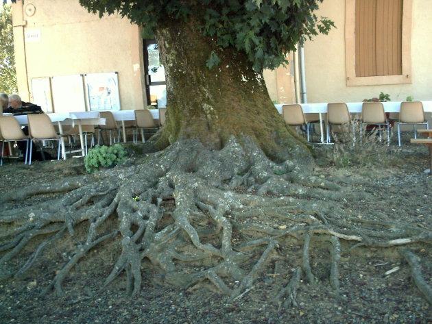 Boomwortels verkleinen terras in Frankrijk