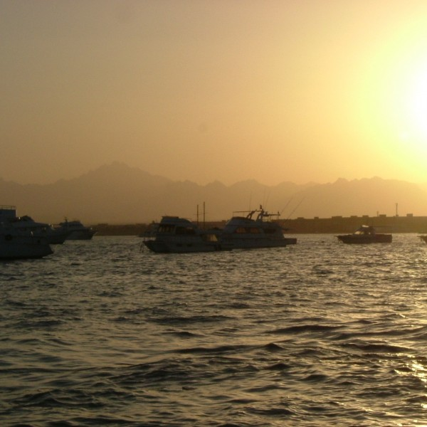 '28456' door Averil