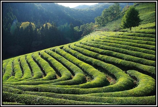 tea time in Daehan-dawon