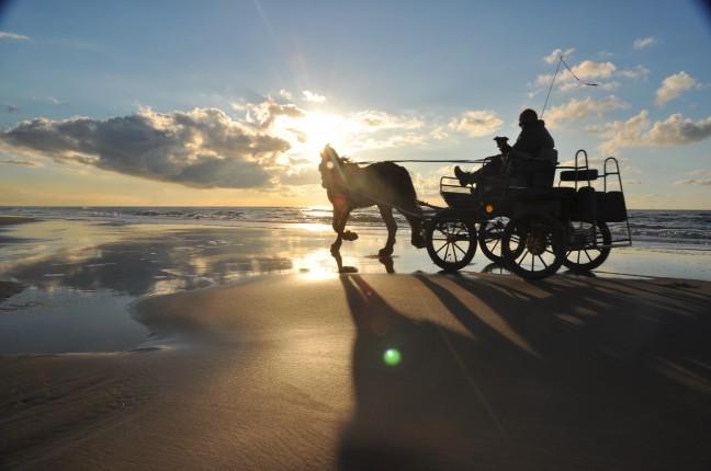 Paard, Wagen, Strand