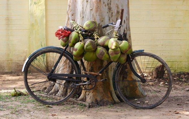 Groene kokosnoten.
