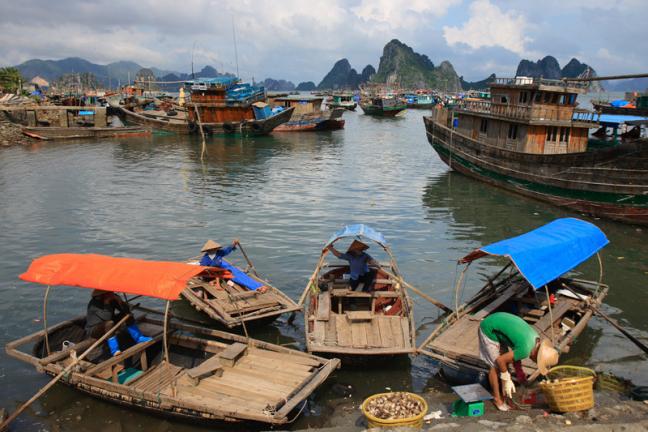 Haven Cai Rong