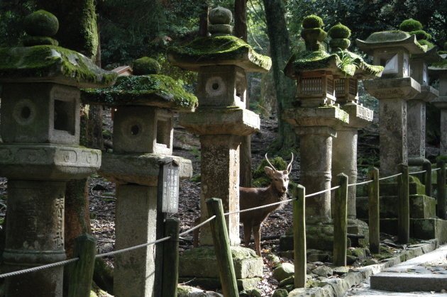 Stenen lantaarns bij de Kasuga Shrine, Nara