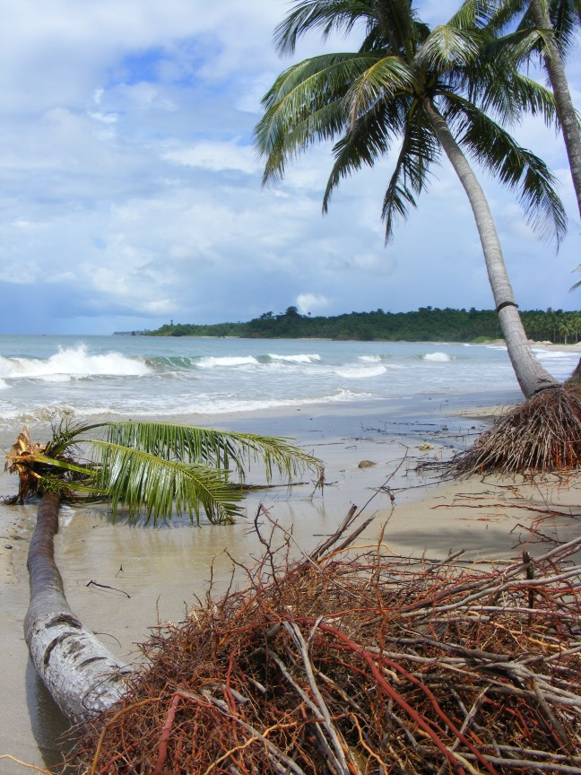 palmbomen op Chaung Tha Beach