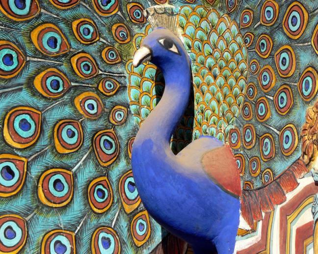 Pauw in het City Palace in Jaipur