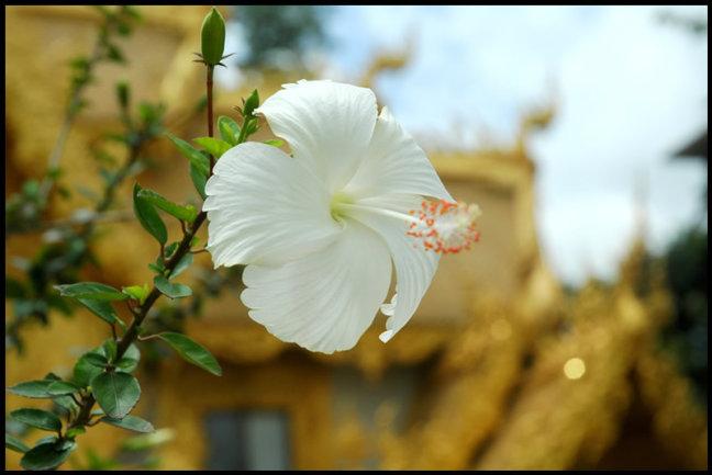 Goudgele Tempel