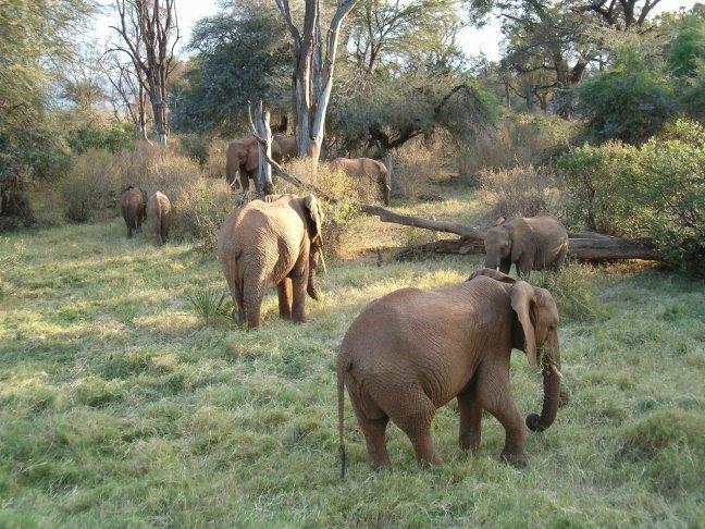 Olifanten in Masai Mara NP