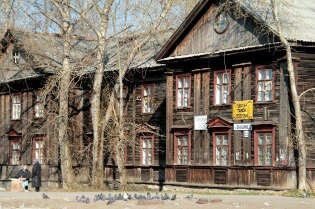 zilvergrijze duiven