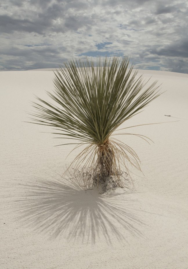 White Sands 3, New Mexico