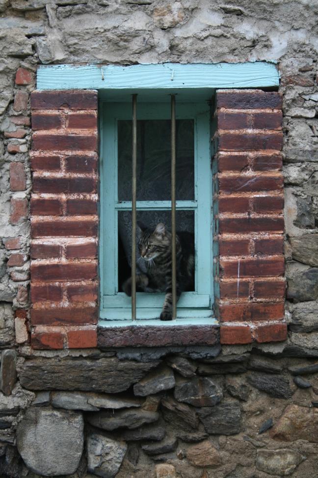 poes in het raamkozijn