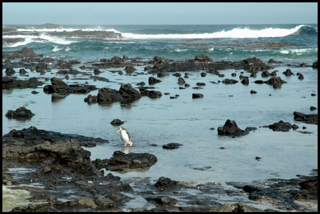 Water: Pinguin