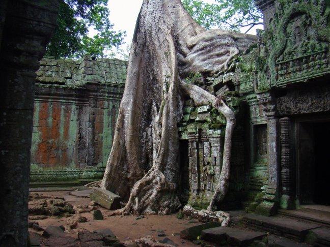 Ta Prohm - Angkor Wat