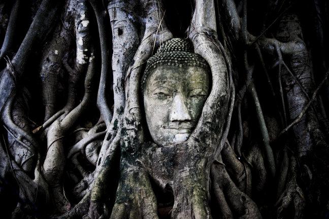 Buddha in tree