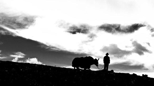 man met yak