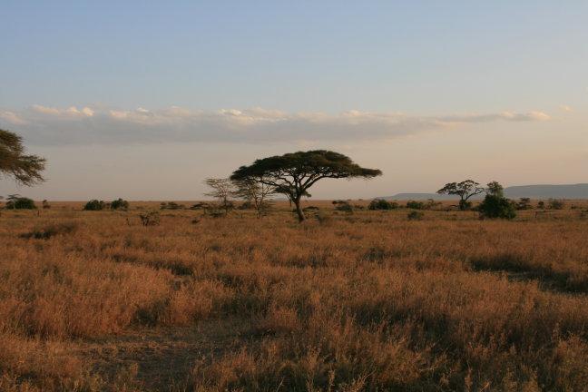 Landschap in Tanzania