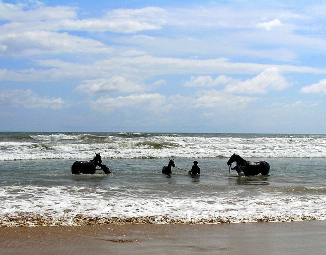 paarden bad