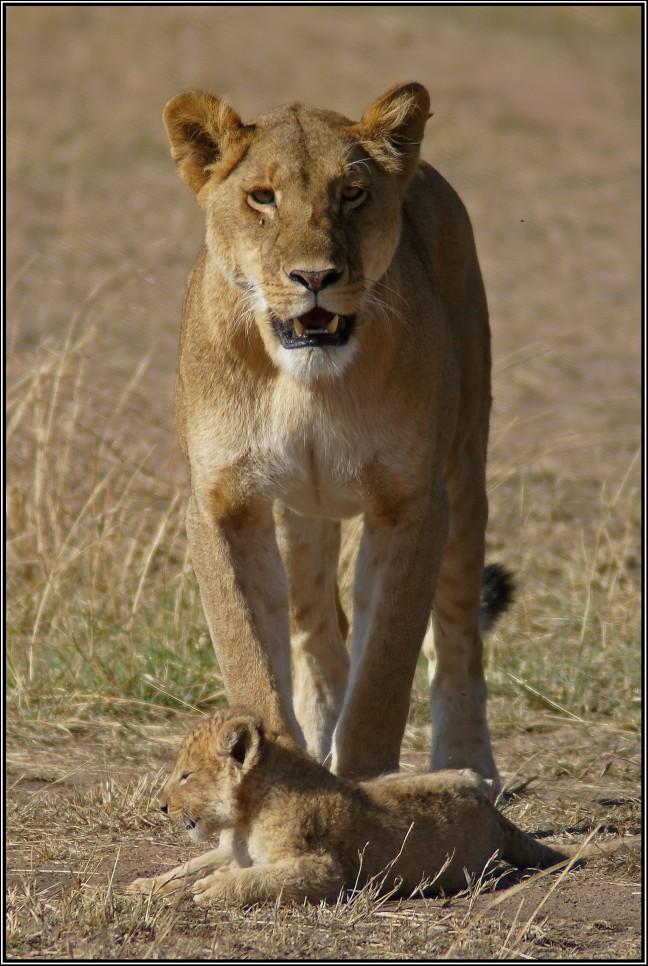 ma leeuw en welp