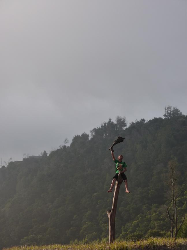 zwaaiende bomenklimmer