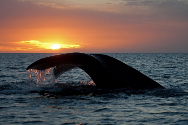 Zuidkaper bij zonsondergang.
