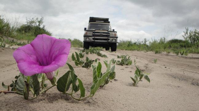 Bloem in de Kalahari