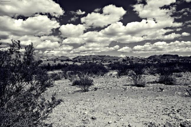 woestijn big bend national park