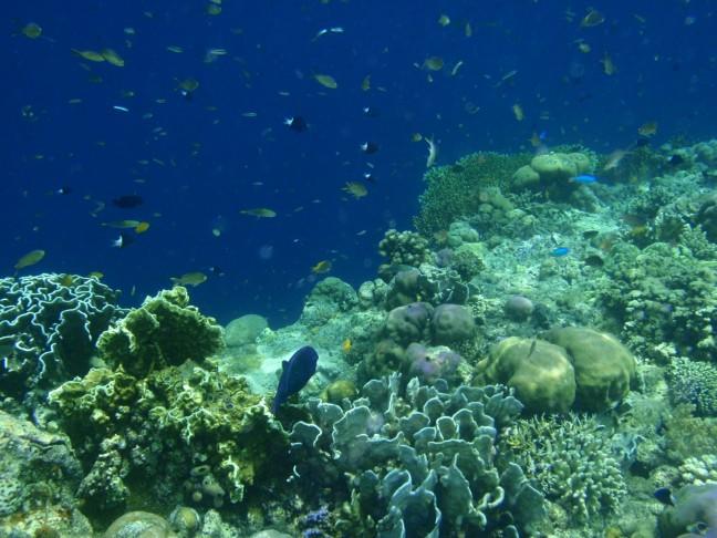 onderwaterfoto Menjangan island