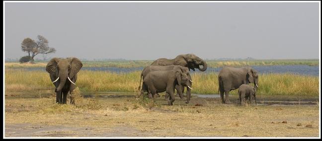 Olifanten bij water