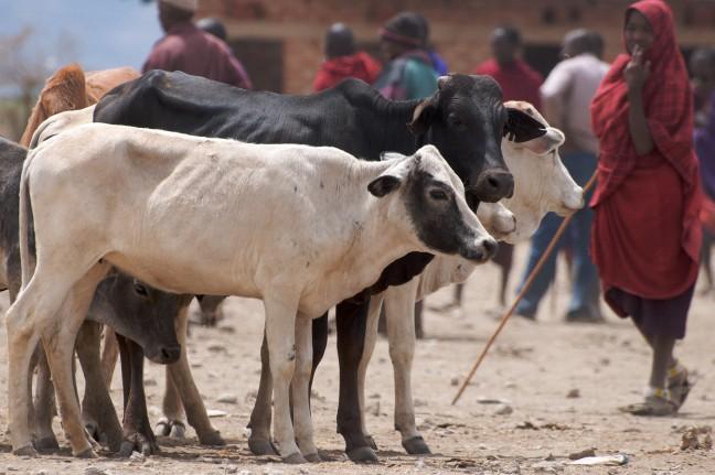 Masai markt