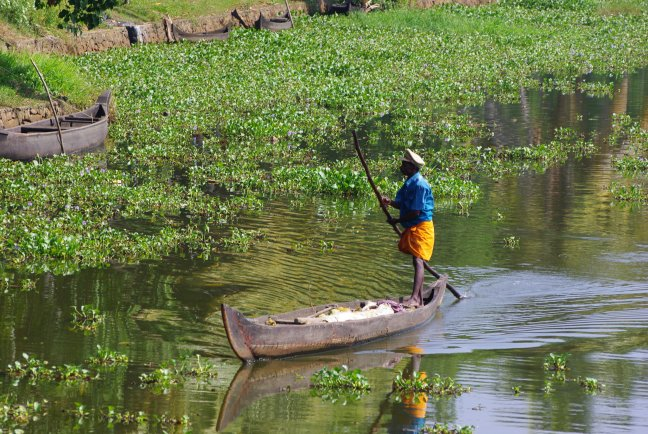 Visser op Lake Vembanad