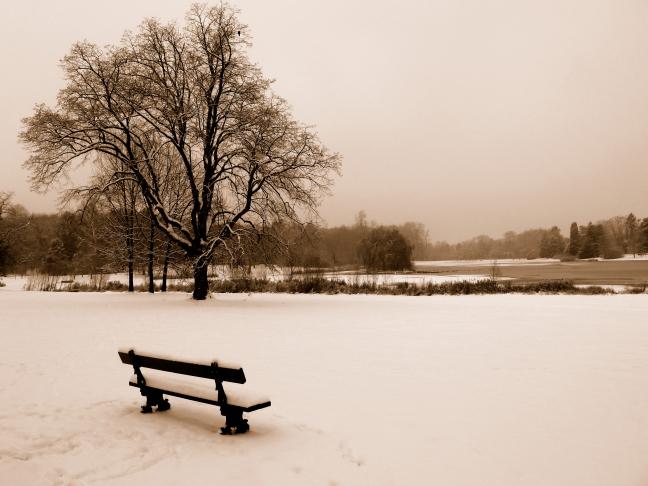 Sneeuwlandschap Tervuren