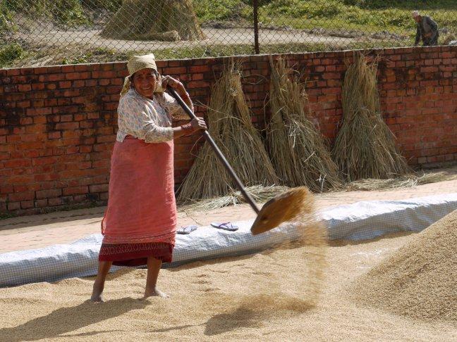 nepalese vrouw schept de rijst droog