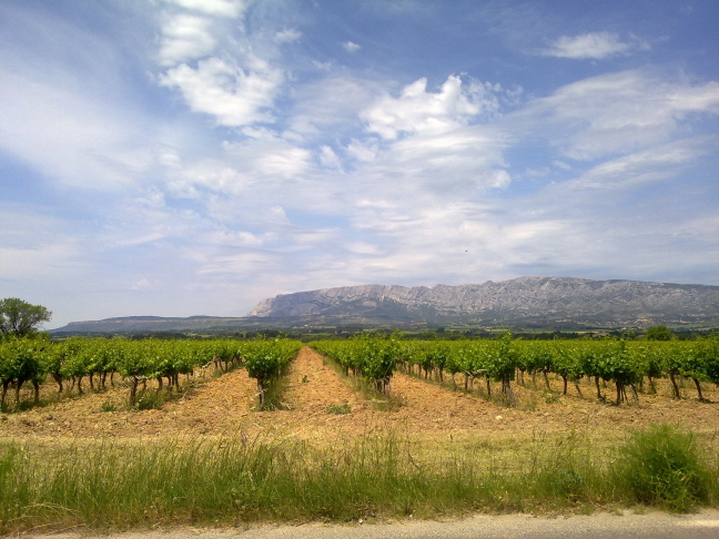 wijngaarden in het zuiden