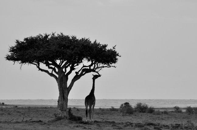 Ontzettend Afrika