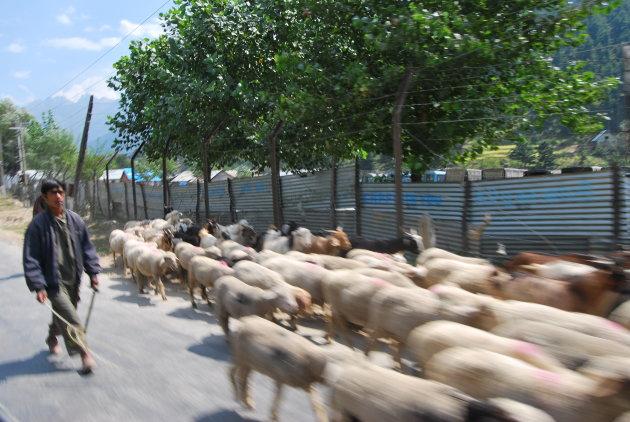 Herders in Kashmir