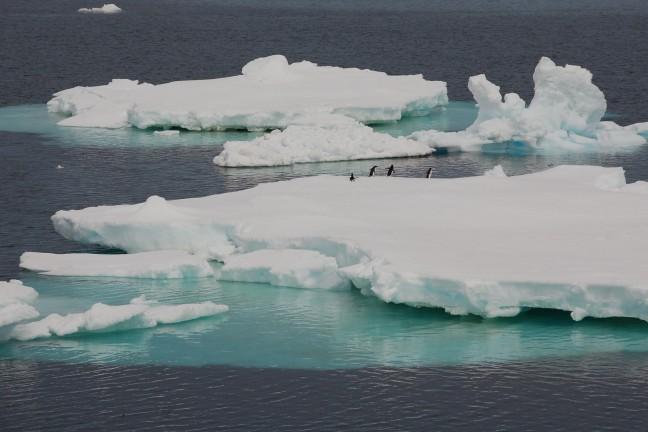 ijsschotsen overal