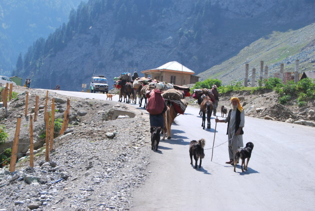 Herders on the move