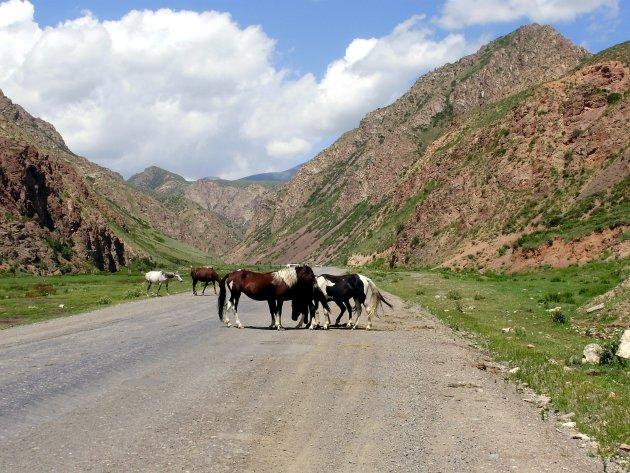 wilde paarden in Kirgizie