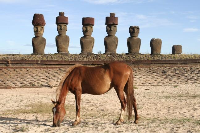 Paard en beelden