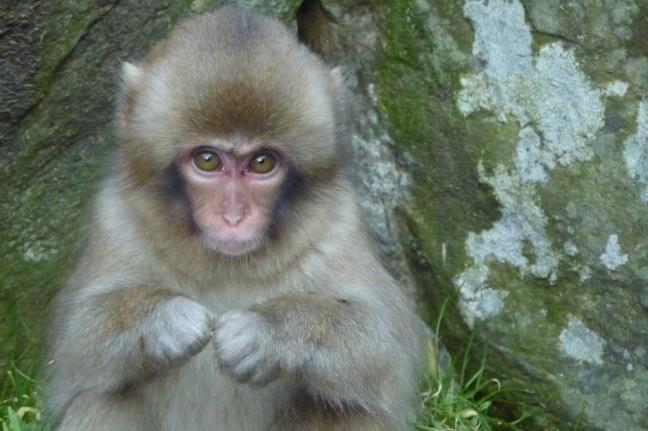 onschuldig aapje ?