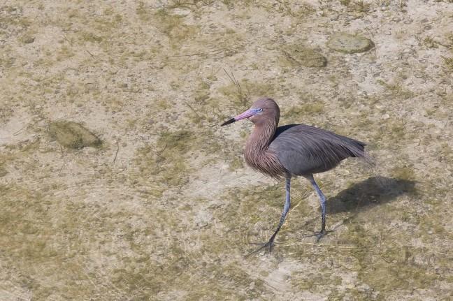 Een 'vreemde' vogel